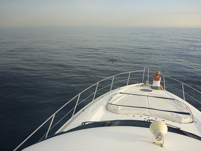 Dolphin watching in Taormina Bay in Sicily